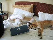 pet friendly hotels santa fe